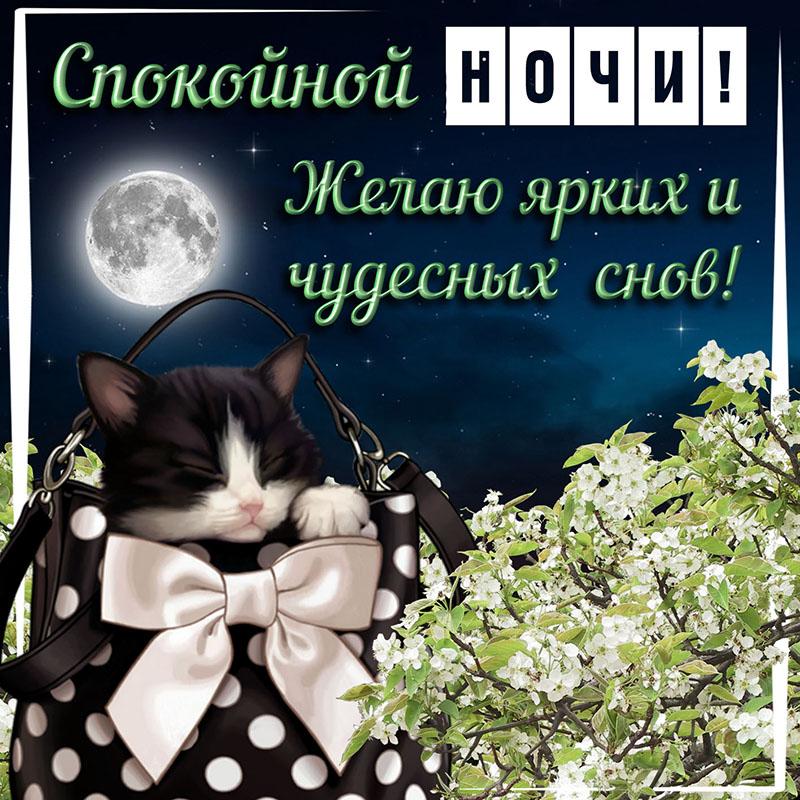 Картинки приятных снов танюша
