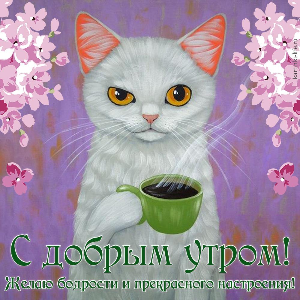чревато доброе утро и хорошее настроение картинки от кота для
