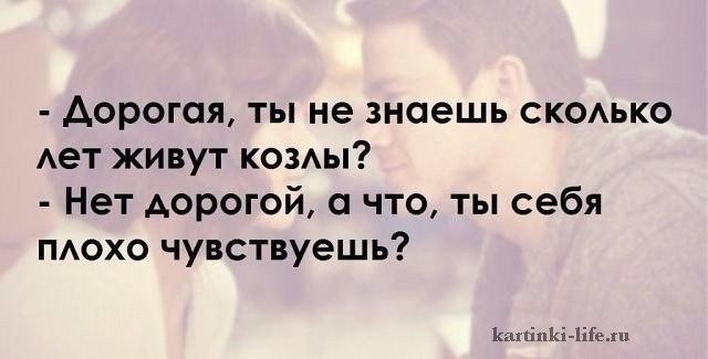 - Дорогая, ты не знаешь, сколько лет живут козлы? - Нет, дорогой, а что, ты себя плохо чувствуешь?