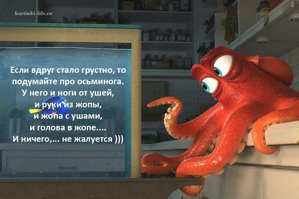 Если вдруг стало грустно, то подумайте про осьминога. У него и ноги от ушей, и руки из жопы, и жопа с ушами, и голова в жопе.... И ничего,... не жалуется )))