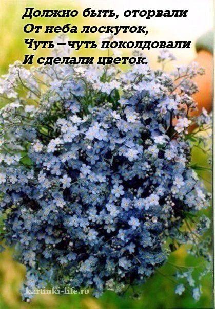 Должно быть, оторвали От неба лоскуток, Чуть-чуть поколдовали И сделали цветок.