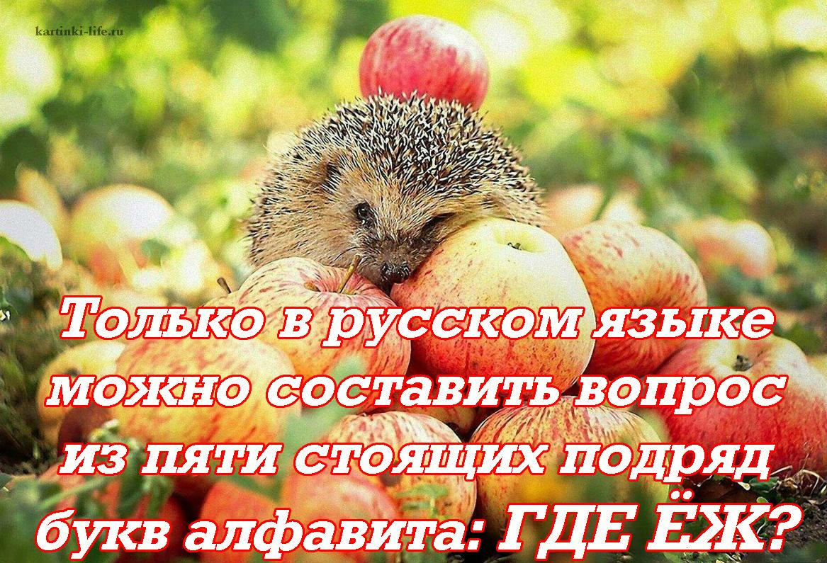Только в русском языке можно составить вопрос из пяти стоящих подряд букв алфавита: ГДЕ ЁЖ?