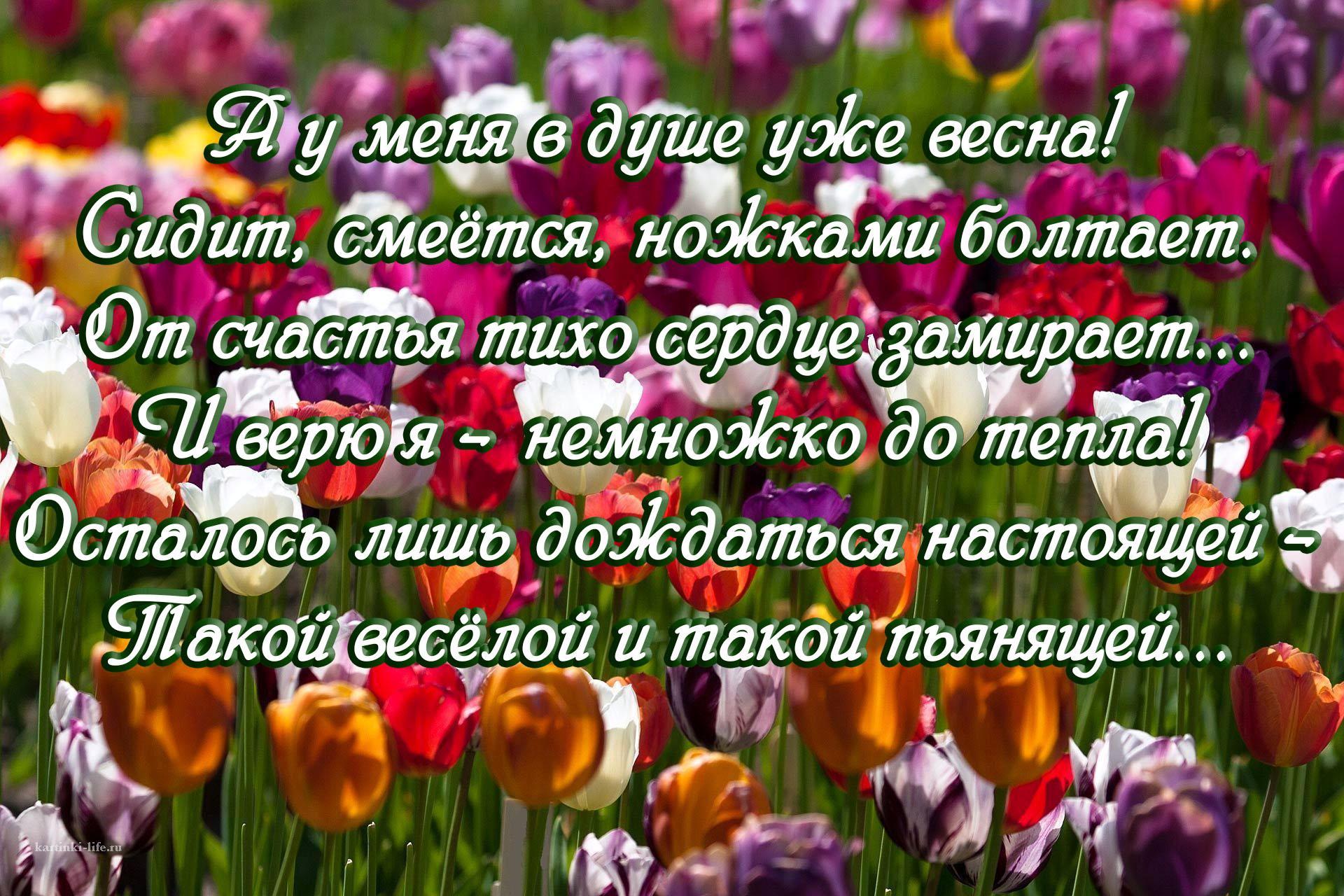 А у меня в душе уже весна! Сидит, смеётся, ножками болтает. От счастья тихо сердце замирает... И верю я – немножко до тепла! Осталось лишь дождаться настоящей – Такой весёлой и такой пьянящей...