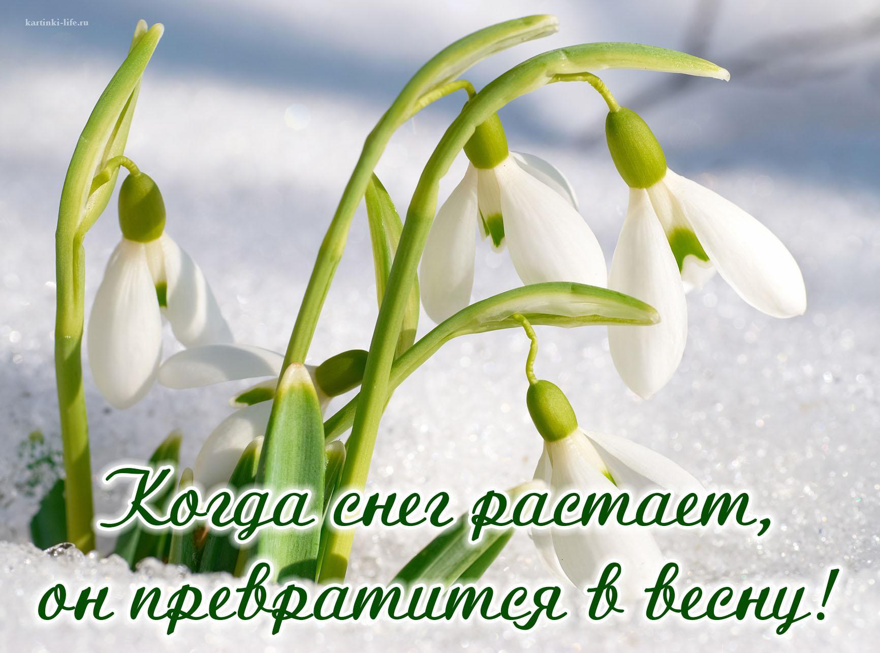 Когда снег растает, он превратится в весну!