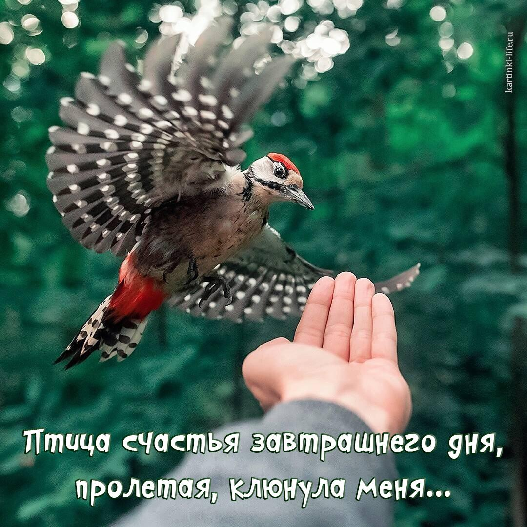 Птица счастья завтрашнего дня, пролетая, клюнула меня…