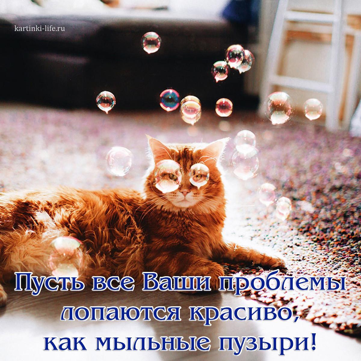 Пусть все Ваши проблемы лопаются красиво, как мыльные пузыри!
