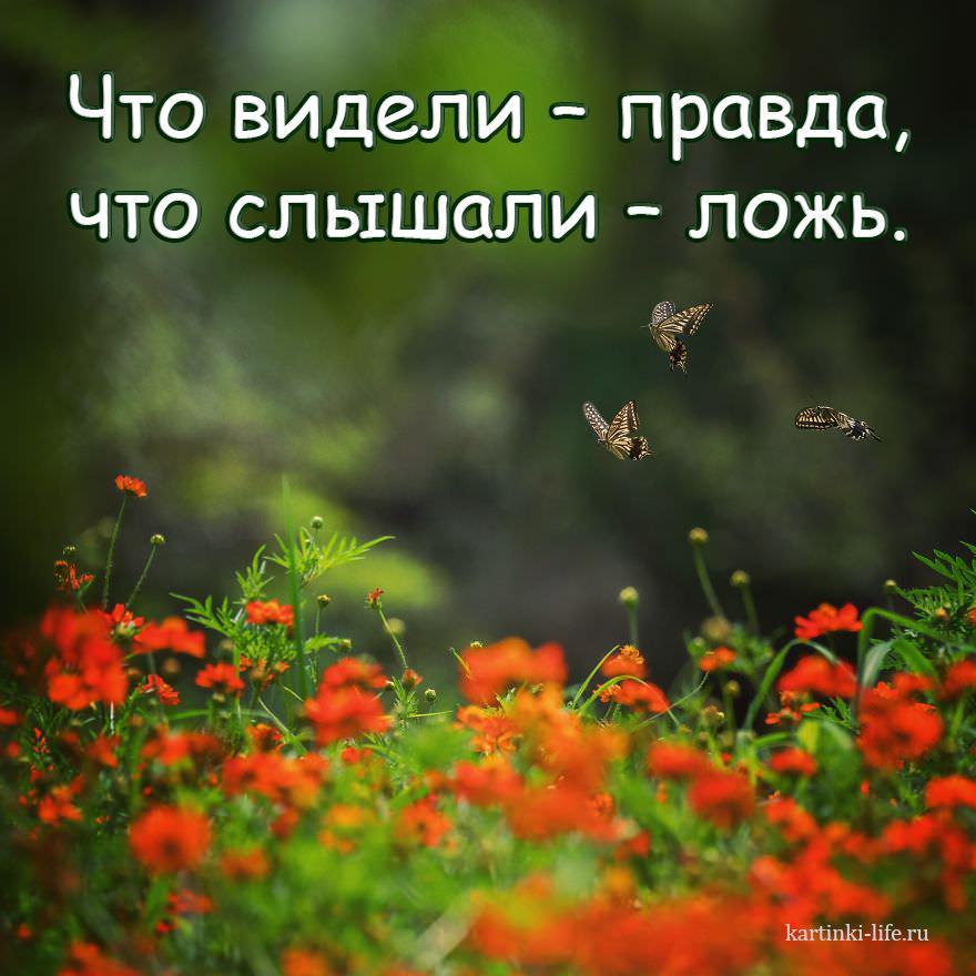 Что видели – правда, что слышали – ложь.