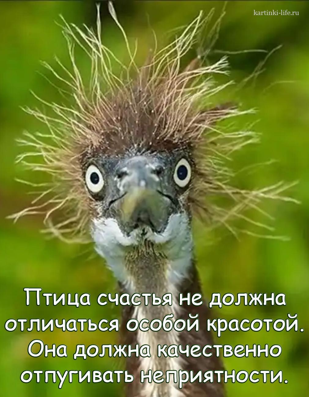 Птица счастья не должна отличаться особой красотой. Она должна качественно отпугивать неприятности.