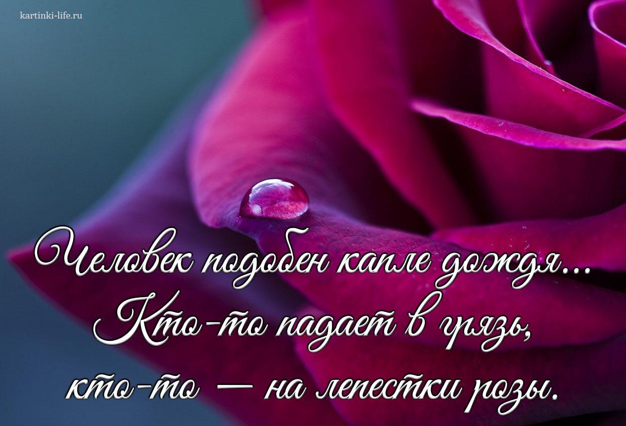 Человек подобен капле дождя... Кто-то падает в грязь, кто-то — на лепестки розы.